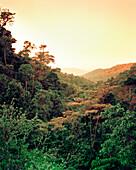MEXICO, Tapachula, Shade grown coffee farm, Finca Irlanda