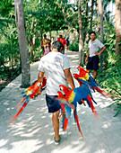 MEXICO, Maya Riviera, man carrying Macaws at Xcaret Eco Park