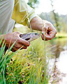 USA, Montana, man holding a Rainbow Trout he caught, Mountain Sky Guest Ranch