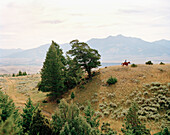 USA, Montana, cowboy riding horse in vast landscape, Gallatin National Forest, Emigrant
