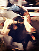 USA, Nevada, Las Vegas, cowboy riding a bull at the National Finals Rodeo