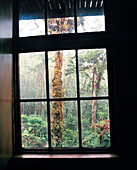 PANAMA, David, Guadalupe, Los Quetzales Lodge, room view from a cabin at the Los Quetzales Lodge, located in pristine cloud forest in the Chiriqui highlands, Central America