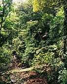 PANAMA, El Valle, Canopy zip line adventure in the treetops of the Jungle, Canopy Advneture, Central America