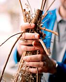 SWITZERLAND, Couvet, Absinthe maker Claude-Alain Bugnon holding wormwood for making Absinthe at the Artemisia Distillerie, Jura Region