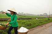 VIETNAM, Hanoi, a farmer transports produce along a countryside road in rural Hanoi