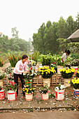 VIETNAM, Hanoi, Countryside, women sell flowers at a road side market in Thanh Bac Ninh
