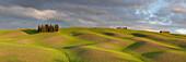 Toskanische Hügellandschaft des Val d'Orcia mit Zypressenhain und erstem Grün im Abendlicht, San Quirico d'Orcia, Toskana, Italien