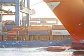 Ship travelling through the container terminal Altenwerder, Hamburg, Germany