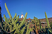 Jardin de Cactus, Cactus Garden, Guatiza, Lanzarote, Canary Islands, Spain