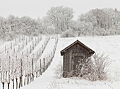 Vineyards in Winter near Baden near Wien, Thermenregion, Lower Austria, Austria