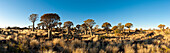 Africa, Namibia, Keetmanshoop. Quivertrees in Quiver Tree Forest, aloe dichotoma. Afrika, Namibia, Keetmanshoop. Koecherbaeume im Koecherbaumwald, Aloe Dichotoma, Kokerboom Woud.
