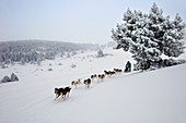 Pirena Advance is a 15 days long sleddog race across the Pyrenees  Spain-France-Andorra Scoring for the world sleddog championship, it is one of the reference races in Europe  It has been held between January and February for 22 years Sled  Dog  Race  Ski