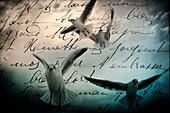 air, aloft, animal, bird, black and white, concept, correspondence, daydreaming, dream, dreamer, dreamlike, dreamy, fantasy, flight, flying, free, freedom, horizontal, In the air, letter, literature, message, Mid-air, monochrome, nature, no people, nostal