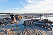 Australia, Western Australia, Broome, exploring WWII Catalina flying boat wrecks in the mud flats at Roebuck Bay duringt low tide