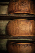 Wheels of cheese aging in cellar