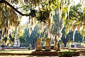 Live Oak trees with Spanish Moss in a cemetery in Selma, Alabama