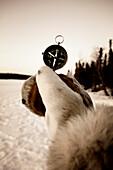 Hand Holding Compass, Northwest Territories near Blachford lake.