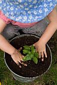 Little Girl Potting a Basil Plant Outside, Toronto, Ontario