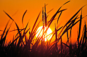 Sunset at Grassy Narrows Marsh, Hecla Island Provincial Park, Manitoba