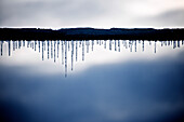 Icicles and snow on a telephone wire just before sunset, Otterburn Park, Quebec