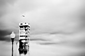 Seagull flying over an abandoned tower, Montreal, Quebec