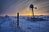 Hoar frost on a foggy winter sunset, Alberta