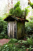 Outhouse with plants on roof, Pacific Rim National Park, Vancouver Island, British Columbia