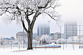 Frosty winter day, Whittier Park, downtown skyline in distance, Winnipeg, Manitoba, Canada
