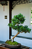 Dr. Sun Yat-Sen Classical Chinese Garden, Chinatown, Vancouver, British Columbia
