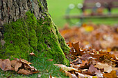 Mossy Tree and Leaves in Park, Vancouver, British Columbia