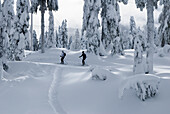 People Skiing on Hollyburn Mountain, Vancouver, British Columbia