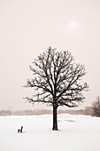 Lone tree and winter landscape, Assiniboine Park, Winnipeg, Manitoba