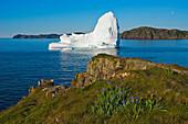 Iceberg floats in Trinity Bay off the Bonavista Peninsula with Rocky Shoreline, Eastern Newfoundland