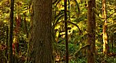 Cathedral Grove, MacMillan Provincial Park, Vancouver Island, British Columbia, Canada