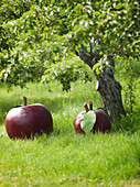 Giant Apple Orchard