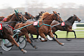 France. Paris. Vincennes. Horses race. At the center, horse : Quick Master. Jockey : P. Vercruysse