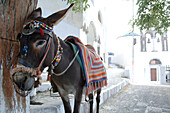 Greece, Aegean Sea, Santorini - Thera, The donkey is still used to carry goods in Thera