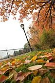 FALLEN LEAVES RESERVOIR PATH CENTRAL PARK WEST MANHATTAN NEW YORK CITY USA