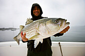 Man holding a striped bass, boston massachusetts usa