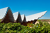 Ysios Winery Designed By Famous Spanish Architect Santiago Calatrava, Laguardia, Basque Country, Spain