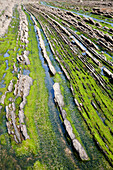 Flysch In The Coast Of Zumaia, Guipuzcoa, Basque Country, Spain