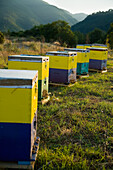 Beehives on the hillside, ierissos halkidiki greece