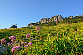 Flowering meadow in front of chapel and Kampenwand, Kampenwand, Chiemgau range, Chiemgau, Upper Bavaria, Bavaria, Germany