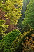 Bäume und Büsche im Frühjahr im Schlosspark Rauischholzhausen, Ebsdorfer Grund, Mittelhessen, Hessen, Deutschland