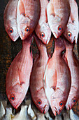 Red fish for sale at a market stand on Playa Las Hamacas beach, Acapulco, Guerrero, Mexico