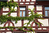 Timber frame house covered with ivy, Fuerth, Franconia, Bavaria, Germany
