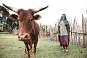 Farmwoman with cattle, Bale Mountains National Park, Oromia Region, Ethiopia