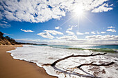 Driftwood at beach, Mornington Peninsula, Victoria, Australia