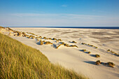 Dunes at Kniepsand beach, Amrum island, North Sea, North Friesland, Schleswig-Holstein, Germany