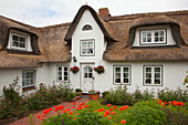 Poppies in front of a frisian house with thatched roof, Nebel, Amrum island, North Sea, North Friesland, Schleswig-Holstein, Germany
